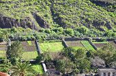 Terrace Fields on La Gomera