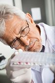 Mature male researcher analyzing microtiter plate in laboratory