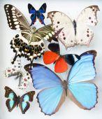 Постер, плакат: бабочки