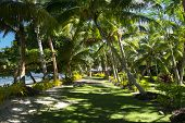 A green walking path at a south pacific tropical resort shows a shaded, grassy walkway to a local bure.