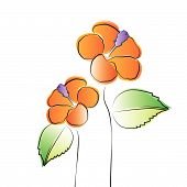 picture of hibiscus  - Vector Illustration of Orange Hibiscus Flowers with leaves - JPG