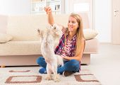 Beautiful young woman training her small Maltese dog at home