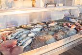 Fresh fish in iced display case
