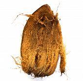 Coconut Spathe