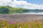 Lake District mountains and pink flowers Maiden Moor Derwent Water The Lakes National Park Cumbria