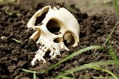 Human skull in ground close-up