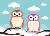 2 owls on branches