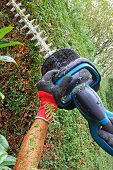 Detail Of Cutting Thuja Hedge With Hedge Clippers, Professional Worker