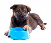 Puppy and empty blue bowl isolated on white