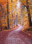 Autumn Walkway Through Beech Tree Forest