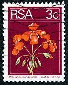 Postage Stamp South Africa 1974 Geranium, Flowering Plant