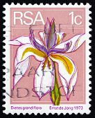 Postage Stamp South Africa 1974 Wild Iris, Perennial Plant