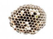 Wasp nidus shot on white background