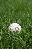 Baseball Grass