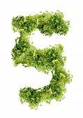 Number parsley