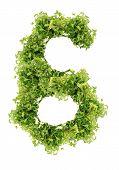 parsley six digits