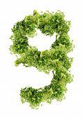 parsley nine-digit
