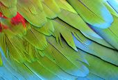 picture of green-winged macaw  - Beautiful of green - JPG