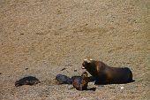 Seals in Puerto Madryn