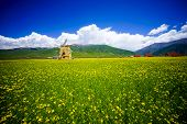 Rape flowers - million hectares of rape flowers beauty