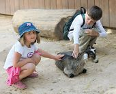 Picture of children and animals in the zoo.
