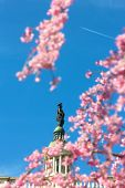 Statue of Freedom in cherry blossoms and visible plane against a clear blue sky