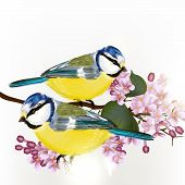 Background With Vector  Cute Couple Of Birds