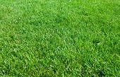 Green Grass Texture From A Field