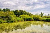 Green Swamp Lake In Cloudy Weather