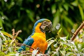 Macaw Parrot Sitting In A Tree