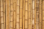 Asian Bamboo Background Surface