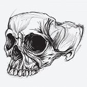stock photo of terrifying  - Skull traditional drawing line work vector for use - JPG