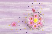 beautiful chrysanthemum flowers on purple wooden background