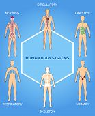 Vector human body systems illustration