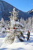 Girl With Big Christmas Tree