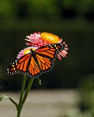 BUTTERFLY ON FLOWERS 7