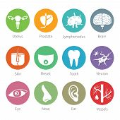 pic of organ  - Vector icon set of human internal and external organs like uterus prostate brain skin breast tooth eye neuron nose ear blood vessel and lymphonodus in flat style - JPG