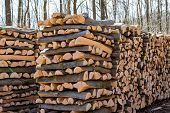 trees in a forest were recut in wood working. natural, energy-friendly and sustainable heat.
