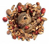 Squirrel Nut Burst