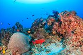 Tropical fish on a deep coral reef