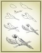 parrot drawing step by step