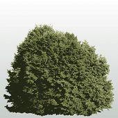 vector big bush