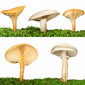 Collection Of Five Mushrooms In The Grass Isolated On White