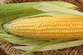 stock photo of corn  - Fresh corn cob. Big corn cob. Fresh yellow corn.