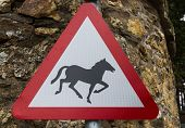 pic of pony  - Beware horse or Pony silhouette - JPG