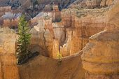 stock photo of breathtaking  - Pine shines against Bryce Canyon Utah cliffs with breathtaking rock formations in the background - JPG