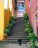 Sintra Steps