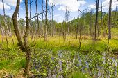 image of wetland  - Beautiful landscape with wetlands at springtime - JPG