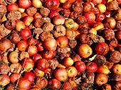 Fallen Fruit - Windfall