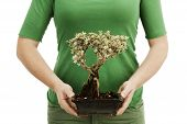 picture of bonsai  - Woman holding bonsai tree Environment and nature protection concepts - JPG